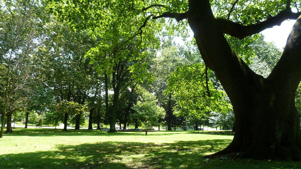 McMichael Park in Summer